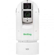 BirdDog Eyes A300 PTZ камера